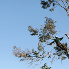Professional Tree Trimming to Preserve Aesthetic Appeal and Ensure Safety